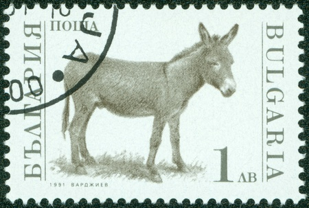 BULGARIA-CIRCA 1991  A stamp printed in the Bulgaria, shows donkey, circa 1991 Stock Photo - 13975868
