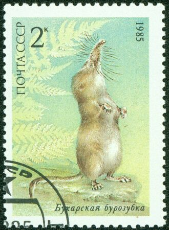marten: USSR - CIRCA 1985  A stamp printed in the USSR shows shrew  circa 1985