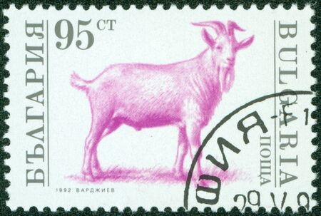 BULGARIA - CIRCA 1992  A stamp printed in Bulgaria shows a goat, circa 1992 Stock Photo - 13975861