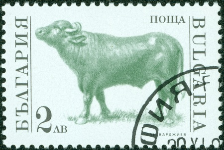 BULGARIA - CIRCA 1991  A stamp printed in Bulgaria shows cattle, circa 1991 Stock Photo - 13975864