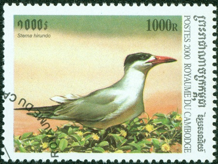 CAMBODIA - CIRCA 2000  A stamp printed in Cambodia showing stema hirundo, circa 2000 photo