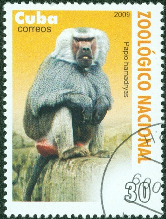 CUBA - CIRCA 2009  a stamp from CUBA shows image of a baboon, circa 2009 photo