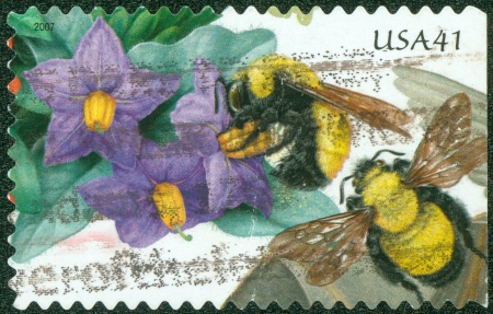 morrison: UNITED STATES - CIRCA 2007  stamp printed by United States of America, shows Purple Nightshade and Morrison Bumblebee, circa 2007