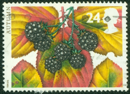 UNITED KINGDOM - CIRCA 1993  A stamp printed in the United Kingdom shows Blackberry, Four Seasons, Autumn, Fruits and Leaves series,circa 1993 photo