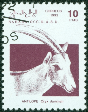 postman of the desert: SAHARA - CIRCA 1992  A stamp printed in Sahrawi Arab Democratic Republic  SADR , shows a Scimitar Oryx  Oryx dammah , circa 1992