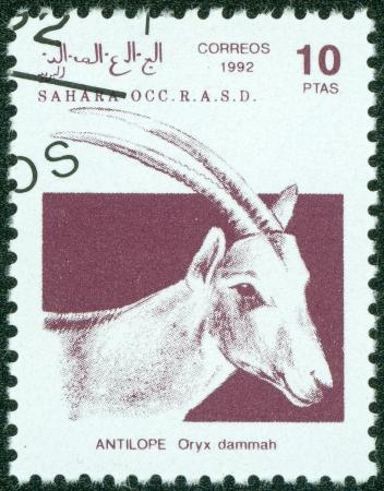 scimitar: SAHARA - CIRCA 1992  A stamp printed in Sahrawi Arab Democratic Republic  SADR , shows a Scimitar Oryx  Oryx dammah , circa 1992