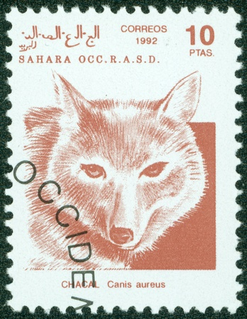 SAHARA - CIRCA 1992  A stamp printed in Sahrawi Arab Democratic Republic  SADR , depicted Golden jackal  Canis aureus , circa 1992