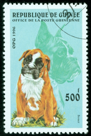 REP OF GUINEA - CIRCA 1996  mail stamp printed in Guinea featuring an Akita Inu puppy, circa 1996