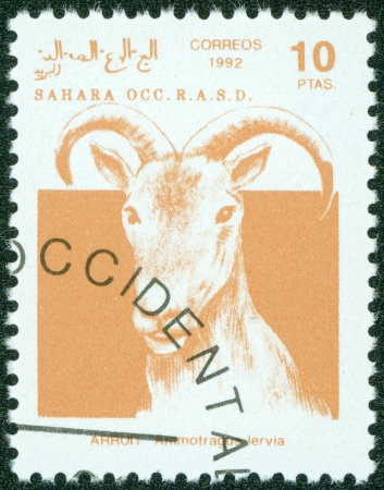 postman of the desert: SAHARA - CIRCA 1992  A stamp printed in Sahrawi Arab Democratic Republic  SADR , shows a Scimitar Arruit  ammotragus lervia , circa 1992 Stock Photo