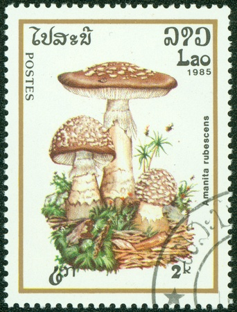 LAOS- CIRCA 1985  A stamp printed in LAOS, shows poisonous Amanita rubescens, circa 1985 Stock Photo - 14591451