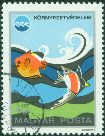 aquarian: HUNGARY - CIRCA 1975  A stamp printed in Hungary shows tropical fishes, circa 1975