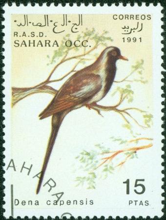 SAHARA OCC RASD - CIRCA 1991  A stamp printed in Sahara OCC  R A S D showing bird dena capensis , circa 1991