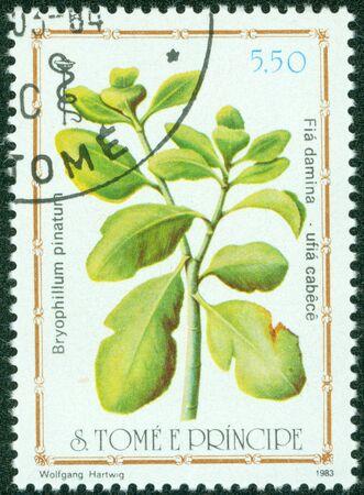 miracle leaf: S TOME E PRINCIPE -CIRCA 1983  A post stamp printed in S Tome e Principe shows herb Kalanchoe pinnata, circa 1983