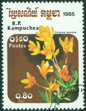 CAMBODIA - CIRCA 1985  A stamp printed in Cambodia shows Crocus aureus, circa 1985 photo