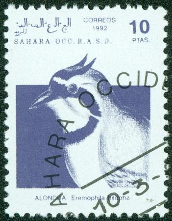 r image: SAHARA - alrededor de 1992 Un sello impreso en la Rep�blica �rabe Saharaui Democr�tica RASD, muestra una Temminck s Lark Eremophila bilopha, alrededor del a�o 1992