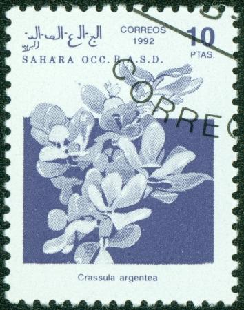 jade plant: SAHARA - CIRCA 1992  A stamp printed in Sahrawi Arab Democratic Republic, shows a Crassula argente, with the same inscription, from the series  Plants , circa 1992