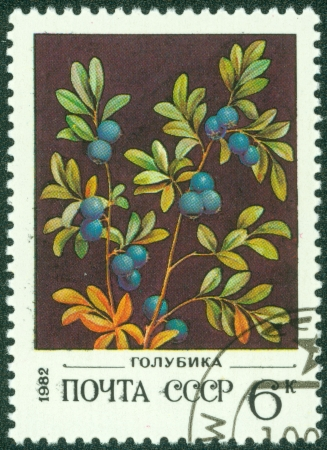 USSR - CIRCA 1982  A stamp printed in USSR  Russia  shows a Wild berries with the inscription  Blueberries a mp;q uot;, from the series  Wild berries , circa 1982
