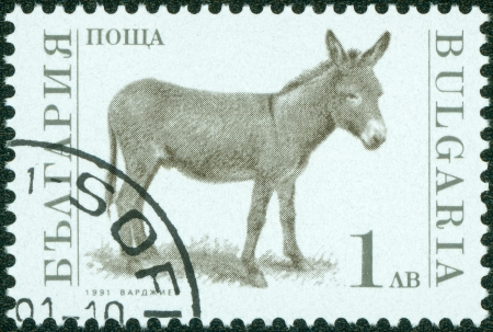 BULGARIA-CIRCA 1991  A stamp printed in the Bulgaria, devoted to farm animals, donkey, circa 1991 Stock Photo - 15108418