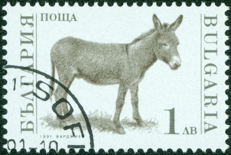 BULGARIA-CIRCA 1991  A stamp printed in the Bulgaria, devoted to farm animals, donkey, circa 1991 Stock Photo - 15108418
