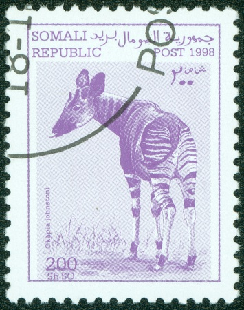 SOMALIA - CIRCA 1998  A stamp printed in somalia shows okapia johnstoni , circa 1998