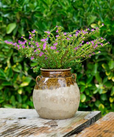 flower pot Stock Photo - 16293610