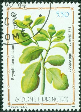S TOME E PRINCIPE -CIRCA 1983 A post stamp printed in S Tome e Principe shows herb Kalanchoe pinnata, circa 1983