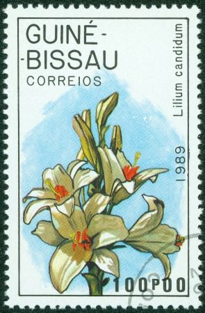 GUINEA - CIRCA 1989  A stamp printed in GUINEA shows flower, circa 1989 Stock Photo - 15294942