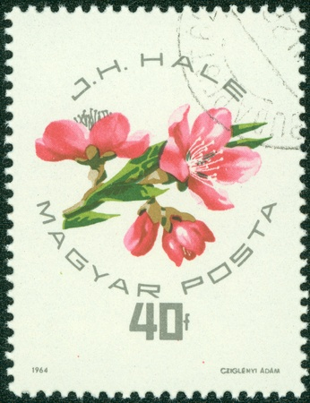 perforated stamp: HUNGARY - CIRCA 1964  stamp printed by Hungary, shows flower, circa 1964