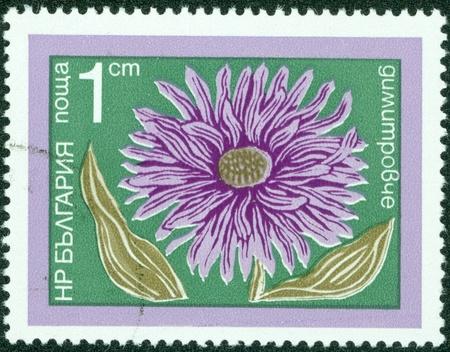 watermarks: BULGARIA - CIRCA 1974  A stamp printed in Bulgaria shows aster, series, circa 1974 Editorial