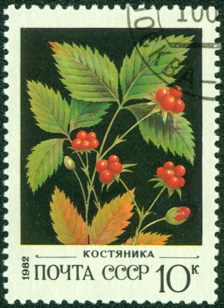 quo: USSR - CIRCA 1982  A stamp printed in USSR  Russia  shows a Wild berries with the inscription  Cranberry  ;quo t;, from the series  Wild berries , circa 1982 Editorial