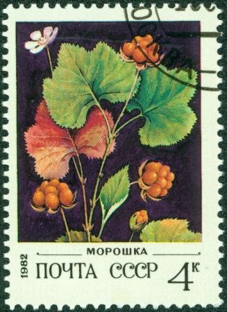 chicouté: URSS - CIRCA 1982 Un timbre imprimé en URSS la Russie montre quelques baies sauvages avec l'inscription Blackberry am p; qu ot;, des baies sauvages de la série, vers 1982