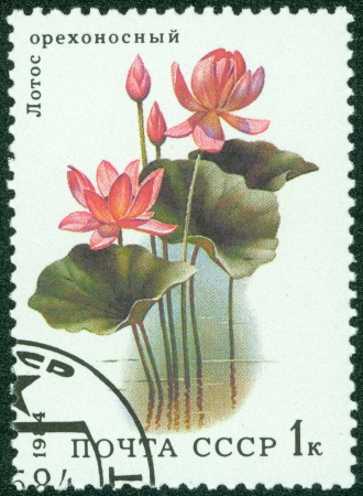 republics: UNION OF SOVIET SOCIALIST REPUBLICS - CIRCA 1984  a stamp from the USSR  Scott 2008 catalog no  5251  shows a lotus flower, from the aquatic plants series, circa 1984 Editorial