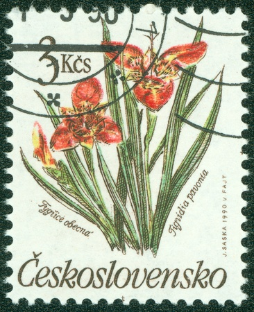 CZECHOSLOVAKIA - CIRCA 1990  A post stamp printed in Czechoslovakia shows Tigridia pavonia flower, circa 1990