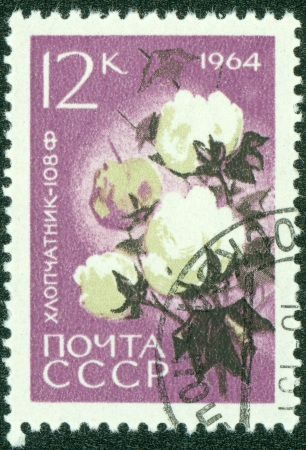 cotton crop: USSR - CIRCA 1964  A stamp printed in USSR  Russia  shows a agricultural crop with the inscription  Cotton  Gossypium   from the series  Agricultural crops bred by Soviet scientists , circa 1964 Stock Photo