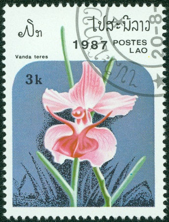 LAOS - CIRCA 1987  A stamp printed in Laos shows Vanda teres, series, circa 1987 Stock Photo - 15621775