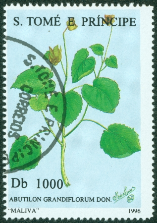 postmail: S TOME E PRINCIPE -CIRCA 1996  A post stamp printed in S Tome e Principe shows abutilon grandiflorum, circa 1996 Stock Photo