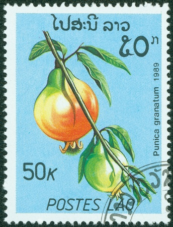 LAOS - CIRCA 1989  A stamp printed in Laos shows Punica granatum or Pomegranate, series, circa 1989