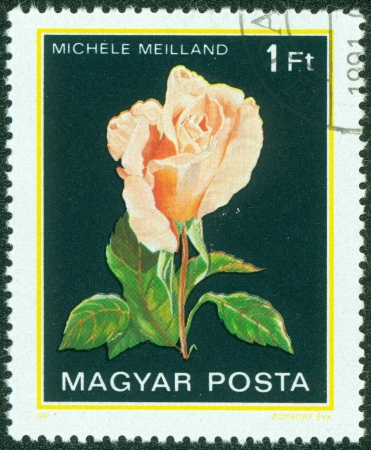 HUNGARY - CIRCA 1982  A stamp printed in Hungary shows a rose with the inscription  Michele Meilland , from the series  Flowers  , circa 1982