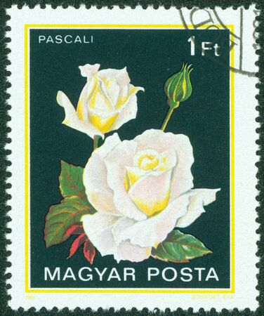 HUNGARY - CIRCA 1982  A stamp printed in Hungary shows a rose with the inscription  Pascali  , from the series  Flowers  , circa 1982