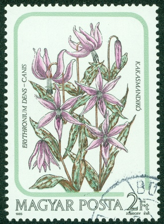 HUNGARY - CIRCA 1985  A stamp printed by Hungary, shows flower, Lily, circa 1985