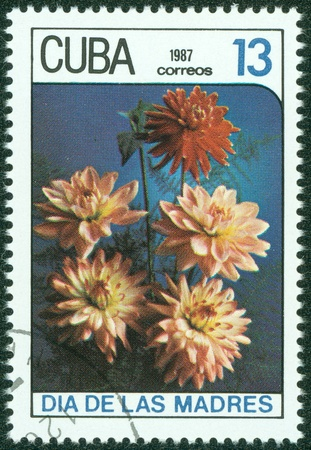 CUBA - CIRCA 1987  A stamp printed in Cuba shows a pink asters , circa 1987 Stock Photo - 15670610