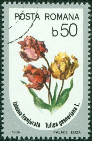 ROMANIA - CIRCA 1986  A stamp printed in Romania showing flower circa 1986