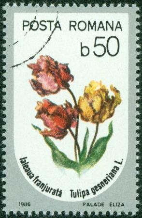 ROMANIA - CIRCA 1986  A stamp printed in Romania showing flower circa 1986 Stock Photo - 15670559