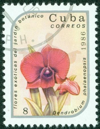 CUBA - CIRCA 1986  A stamp printed in Cuba shows image of a Dendrobium phalaenopsis, circa 1986 Stock Photo - 15670632