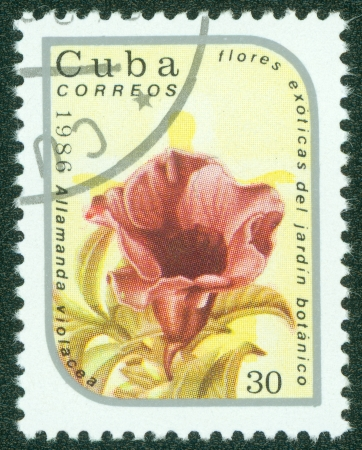 CUBA - CIRCA 1986  A stamp printed in Cuba shows image of a Allamanda violacea, circa 1986 Stock Photo - 15670631