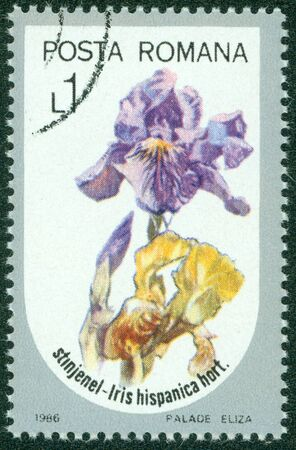 ROMANIA - CIRCA 1986  A stamp printed in Romania showing flower circa 1986 Stock Photo - 15670638