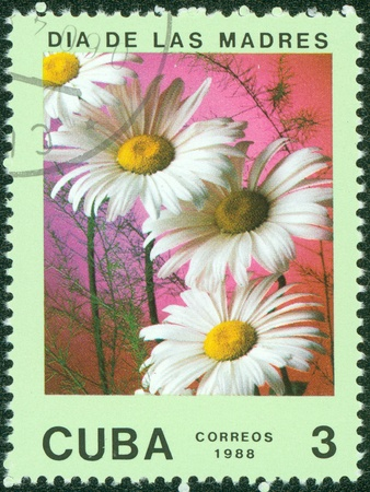 CUBA - CIRCA 1988  A stamp printed in Cuba shows daisies, series is devoted to flowers, circa 1988 photo