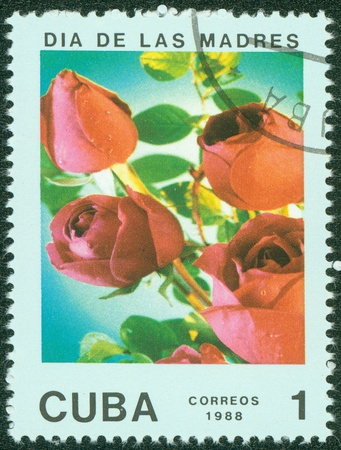 CUBA - CIRCA 1988  A stamp printed in CUBA shows red rose, circa 1988 photo