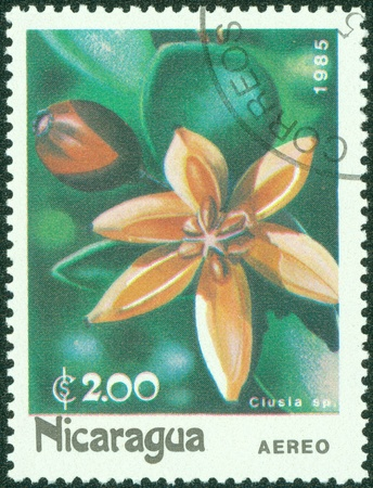 NICARAGUA - CIRCA 1985  A stamp printed in Nicaragua showing Clusia flower, circa 1985 Stock Photo - 15836166