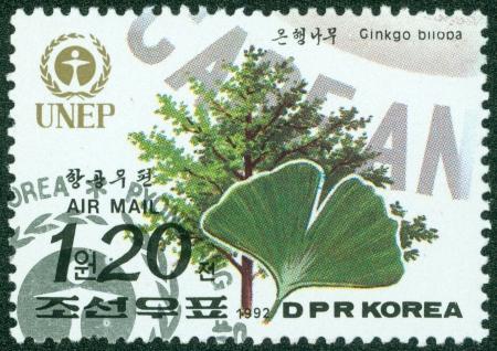 ginkgo tree: NORTH KOREA - CIRCA 1992  A post stamp printed in North Korea shows image of Ginkgo tree, circa 1992